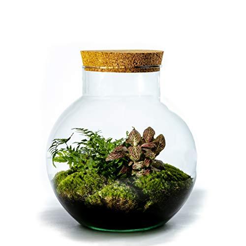 DIY Öko Flaschengarten von Botanicly: Bolder – Botanic Mix (Höhe: ca. 30 cm, Breite: ca. 18 cm)