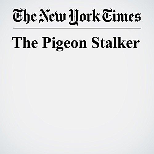 The Pigeon Stalker copertina