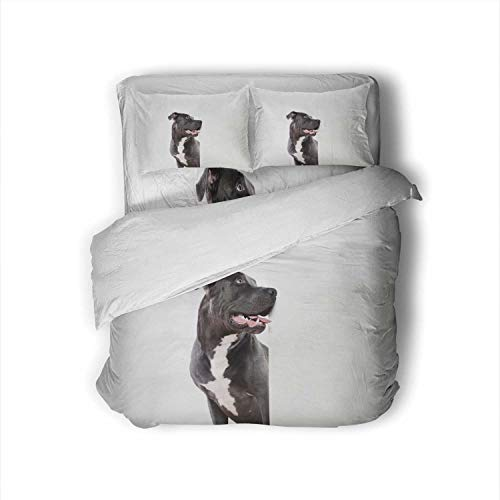 C COABALLA Black Pit Bull Dog and White Board Spain,Twin Size Sheets Bed Sheets-Super Soft 4 Pieces 1 Fitted Sheet,1 Flat Sheet, 2 Pillowcases Dog Twin