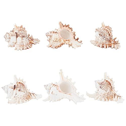 AHANDMAKER Conchas de mar natural, 6 piezas de conchas, 4.5 x 3.6 x 3.4 pulgadas, decoración del hogar, relleno de jarrón, centro de boda, Navidad, manualidades, fabricación de velas