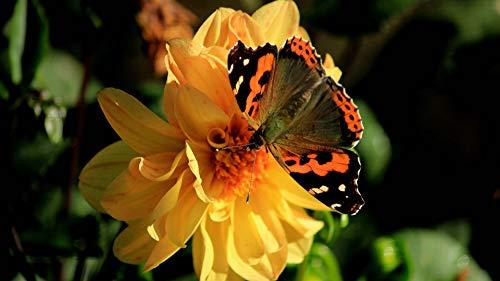nobrand Puzzles1000 Teile Puzzle Kinder Adult Intelligence Game DIY2020 Neue Geschenke Schmetterling Sammeln Honig