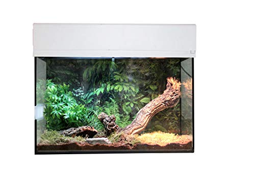 Lucky Reptile sk50ts de W Starter Kit Araña Plus Escorpión, 50 cm, Color Blanco