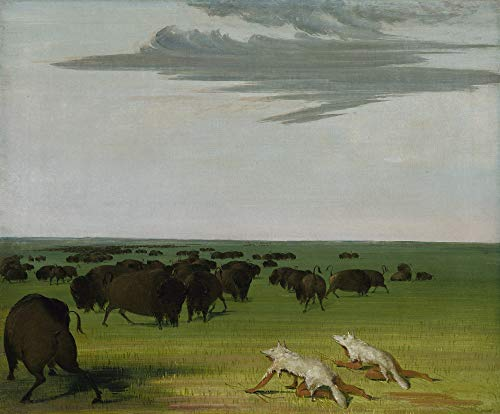 George Catlin: Buffalo Hunt under the Wolf-skin Mask, obra de arte vintage de América Occidental, 24 x 17 pulgadas (A2)
