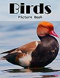 Birds Photography Photo Book   V102