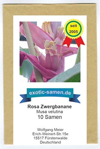 Rosa Zwergbanane (pink velvit-Banane) - Musa velutina - 10 Samen