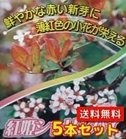 ヒメシャリンバイ(庭木の種類)