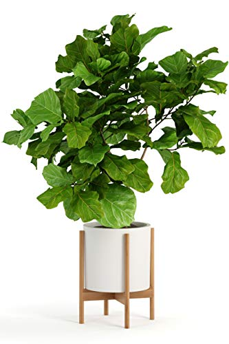 Fox & Fern Modern Plant Stand With 12' Pot - Including White Planter Pot - Drainage Plug - Acacia Wood