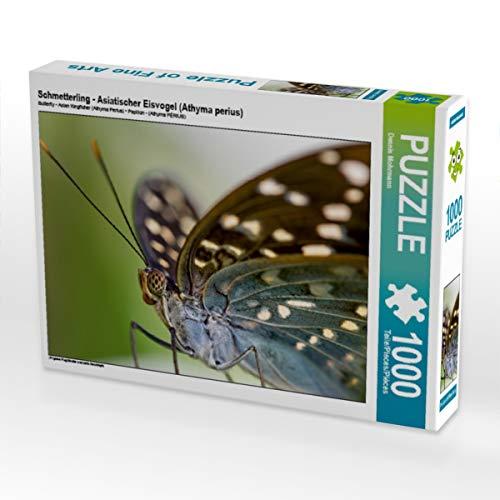 Mariposa – Pájaro helado asiático (Athyma perius) 1000 piezas puzle horizontal: filigrana de aviones artistas y delicados criaturas (CALVENDO animales)