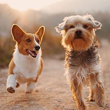 あなたの犬を歩く-気分