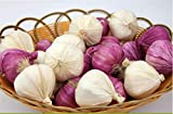 Zzooi Artificial Lifelike Fake Garlic Faux Garlic White and Red 10PCS Totall