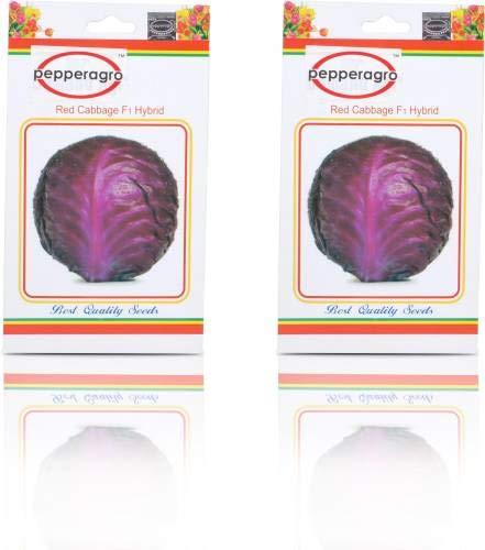 FERRY Hohe Wachstum Seeds Nicht NUR Pflanzen: Seed Rotkohl Gemüsesamen Packung mit 2 Seed (2 pro Paket)