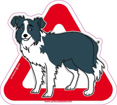 Border Collie a bordo