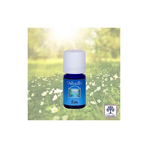 Oshadhi Aceite esencial orgánico de pachulí (pachulí de Pogostemón), calmante, restaurador, 5 ml