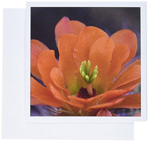 3dRose Engelmann Prickly Pear Cactus, Sonoran Desert Arizona - US03 FZU0026 - Frank Zurey - Greeting Cards, 6 x 6 inches, set of 12 (gc_87916_2)