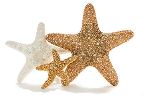 Nautical Crush Trading Starfish Combo | Jungle, Knobby, Sugar Starfish Variety Pack | Plus Free Nautical Ebook By Joseph Rains