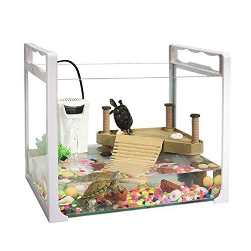 Kleines Glasbecken – ein Aquarium, das Fische und Schildkröten auf dem Tisch füttern kann.