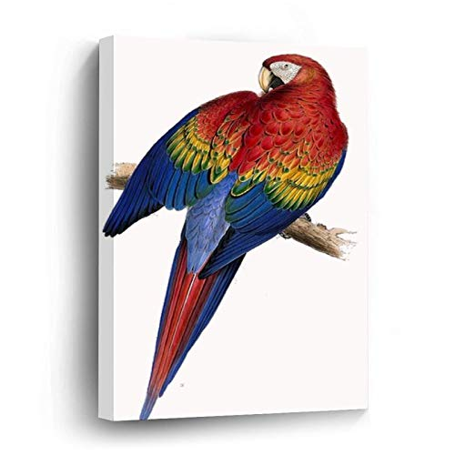 Illustration of A Scarlet Macaw Vector Canvas Picture Painting Artwork Wall Art Poto Framed Canvas Prints for Bedroom Living Room Home Decoration, Ready to Hanging 12'x12'