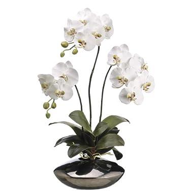 Silk Decor 31-Inch Phalaenopsis Plant, White/Green
