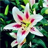 Semillas de flores genéricas frescas 200 piezas Lilium Brownii para plantar rosa blanco 1