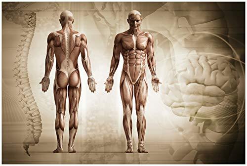 Wallario Glasbild Anatomie Mensch II - 60 x 90 cm in Premium-Qualität: Brillante Farben, freischwebende Optik