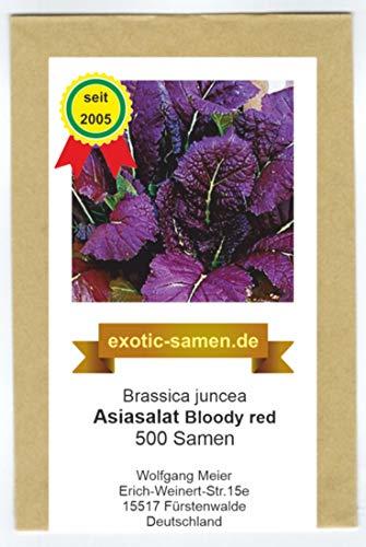 Asia Salat - Bloody Red - gefranste Blätter - Bassica juncea - 500 Samen