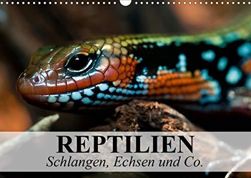Reptilien Schlangen, Echsen und Co. (Wandkalender 2021 DIN A3 quer)