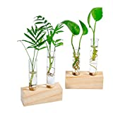 Ivolador Crystal Glass Double Test Tube Vase in Wooden Stand Flower Pots for Hydroponic Plants...