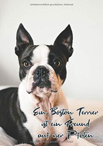 Ein Boston Terrier ist ein Freundauf vier Pfoten: Notizbuch DIN A4 - liniert mit Seitenzahlen - Linien
