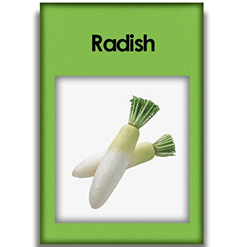 200 Radish Seeds Garden and Outdoor Survival Contains Fresh Seed Vegetables That are Easy to Grow by Planting Methods