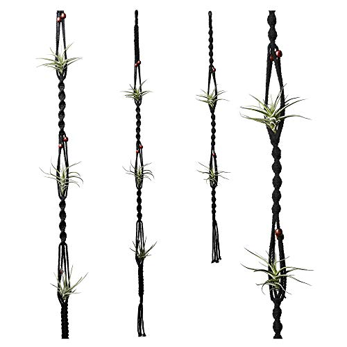 POTEY 604202 Air Plant Hanger - Air Plant Wall Hanger for Tillandsia Home Decor Hanging Air Plant...