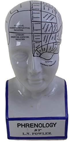 Antik 2000 Phrenologie Kopf Büste aus Keramik nach dem Modell von L.N.Fowler