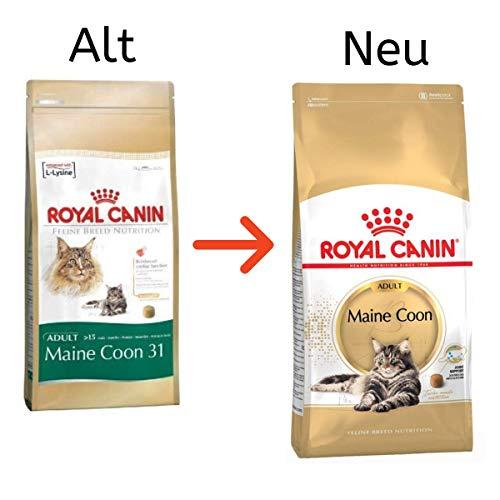 Royal Canin Main Coon 31-Trockenfutter für ausgewachsene Katzen, 2 kg