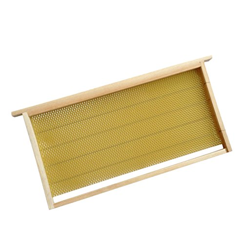Apis Mellifera Apis Cerena Nest Frame Comb Foundation