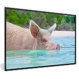 Poster mit Rahmen Pig Beach Bahamas - Schwein im Wasser