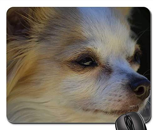 Gaming-Mauspads, Mauspad, Kleiner Hund Hund Chihuahua Natur Tiere Haustiere süß