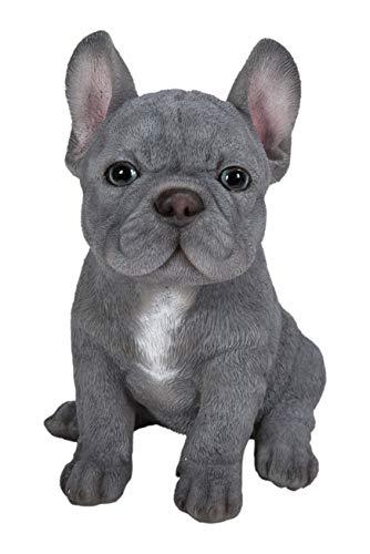 Vivid Arts – Pet Pals azul French Bulldog decoración de hogar o jardín (PP-BFRB-F)