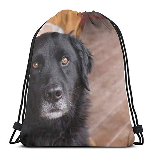Rasyko - Bozal para perro negro con cordón, bolsa de gimnasio, mochila de viaje, ligera, para hombre y mujer, 42,9 x 35,5 cm