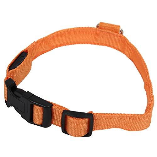 Hrsptudorc Perro de Nylon LED Nocturna de Seguridad Collar Intermitente Correa del Light-up Naranja M