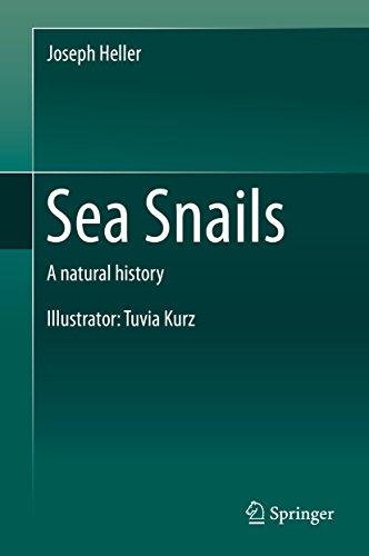 Sea Snails: A natural history (English Edition)