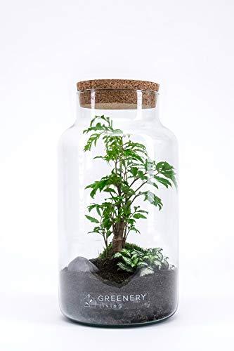 GreeneryLiving CORK-4 Premium DIY-Flaschengarten - Ökosystem im Glas - hochwertiges Pflanzenterrarium - Mini-Garten mit echten Pflanzen - Design-Accessoire ideal als Geschenk - Handmade in Germany