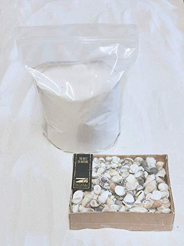 Doubleyou Geovlies & Baustoffen, sabbia decorativa chiara con conchiglie, per decorare, effetto spiaggia, Tessuto, Bianco naturale, grana 0,1 - 0, 4., 1kg Sand incl 1000g Muscheln