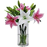 Olrla Flores artificiales de lirio sintético, 6 ramos de flores, colores mezclados reales para decoración del hogar, boda, fiesta, tienda, arreglo de flora (rosa + blanco, 6)