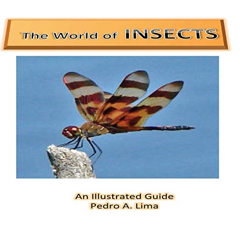 The World of Insects: an illustrated guide
