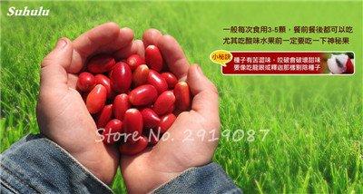 30 Pcs Tropical miraculine Fruit graines Anacardium Arbre Pot Plante Occidentale Jardins des plantes Miracle Fruit Légumes Livraison gratuite 10