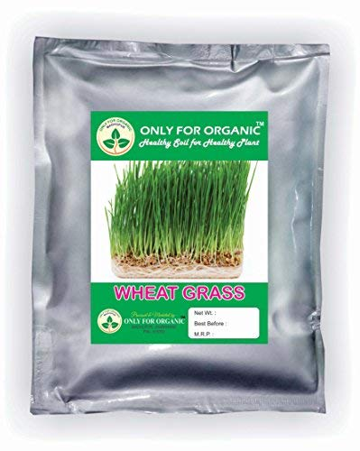 Only for Organic ! Hybrid Wheat Grass Seeds : 900 Grams !