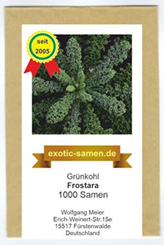 Grünkohl - Frostara - halbhoch - extrem frosthart - 1000 Samen