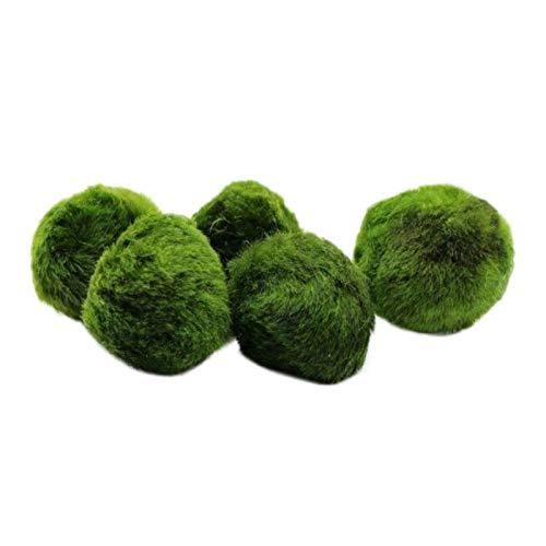 UEETEK 5pcs Diametro 4 cm Marimo Moss Ball Cladophora Ball per terrario Ornamenti del serbatoio di pesci dell'acquario