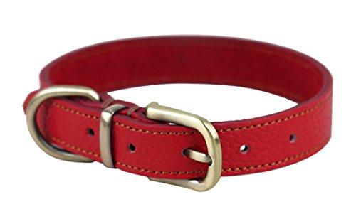 Rantow Comodo Collare Largo Imbottito in Pelle da 2 cm per Cani di Taglia Piccola, Taglia Regolabile da 33 cm a 39 cm (Rosso)