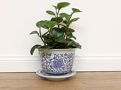 Yajutang Maceta de porcelana china, diseño de girasoles, color azul y blanco, diámetro de 20 cm