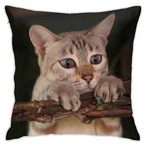 Cat (9) Funda de almohada cuadrada personalizada para sofá, dormitorio, oficina, 45,72 x 45,72 cm